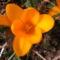 Jani növényei-gyümölcsei (7)