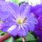 Jani növényei-gyümölcsei (80)