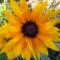 Jani növényei-gyümölcsei (83)