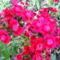 Jani növényei-gyümölcsei (84)