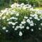 Jani növényei-gyümölcsei (85)