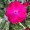 Jani növényei-gyümölcsei (87)