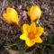 Jani növényei-gyümölcsei (88)