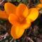 Jani növényei-gyümölcsei (8)