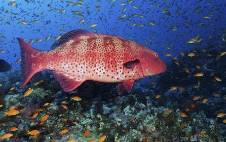 víz alatti világ 4