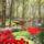 Garden_824240_31807_t