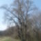 Hét nővér fa