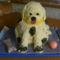 Kutya formájú csokitorta.Első próbálkozás!