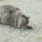 Pulcsi cicánk és játszópajtása