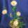 gyöngyből készült virágok