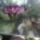 Orchideak-001_832496_62743_t