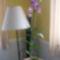 Rózsaszí orchidea 1.
