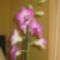Rózsaszín orchidea 2.