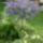 Gulyás Zoltán virág-udvar-kert