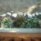 rezeda és dohányvirág