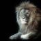 Lion-Fractal
