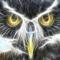 Owl-Gaurdian