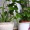Aloe-vera, Hibiszkusz alsó része a teraszon....