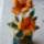 csuhévirágok 2