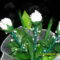 (3)fehér rózsák