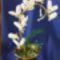 pillangó orchidea