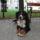 Artúr nevű kutyám