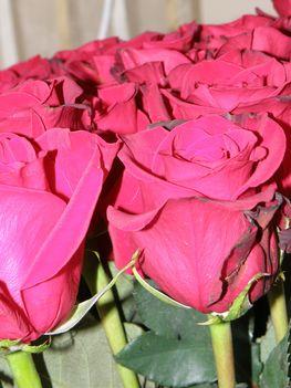 30 szál rózsa 012
