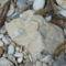 Megkövült kagylós üledékdarabok a Mounda fok körül