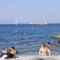 Tirrén tenger, Caprin