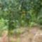 kertünkböl 1
