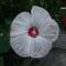 Virágom-virágom... 1