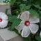 Virágom-virágom... 2