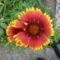 Virágom-virágom... 3
