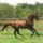 lovakról képek