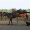 lovas kép 6