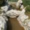 mesterségesen kialakított patak