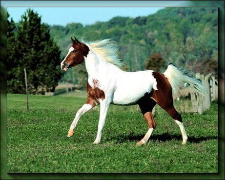 lovak 11