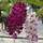 máhr józsef orhideái