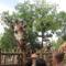 Zsiráf az Állatkerben
