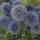 Képek kertemböl , virágaim,stb  4