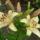 Mary virágai,és egyéb növények