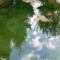képek kertemből-tükrüződés