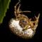 lasszós pók 2