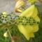 Zöld virágos