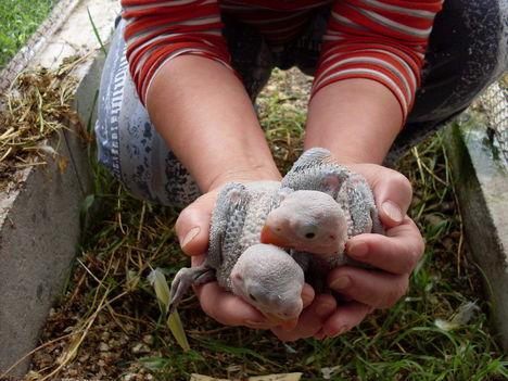 Erzsike--nagysándor bébikkel