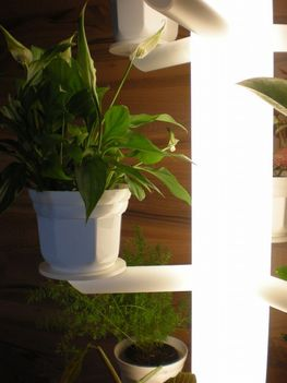 Növénylámpa.