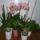 Orchidea_6__2010_szeptember_860668_45755_t
