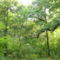 Erdőben 2