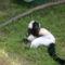 nyíregyházi állatpark