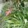 Kaktusz_fajta_873263_11798_t